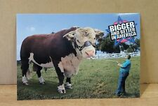New Postcard ~ Bigger and Better in America  (Whiteface Bull)