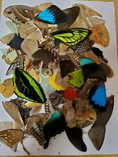 100 plus pieces assorted Real butterfly and moth wings