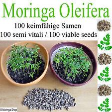 100 Moringa Samen - frische Ernte höchst keimfähig -semi vitali - viable seeds