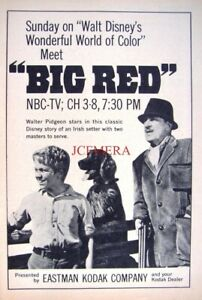 'BIG RED' Disney Film 1964 TV Showing Advert Print - Small Movie Ad to Frame
