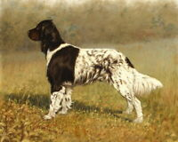 Home Decor Hound Classical Oil painting Art Giclee Printed on Canvas P682