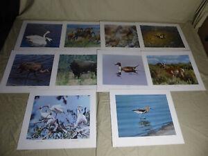 "Set of 10 ""U.S. WILDLIFE PORTRAIT SERIES No. 1"" 17x14"" Color Art Prints, 1969"