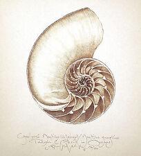 CHAMBERED NAUTILUS SEA SHELL - INTERIOR original hand worked SEPIA art print