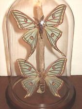 Graellsia isabellae Silk Moth Dome [Spanish Moon Moth (pair)]