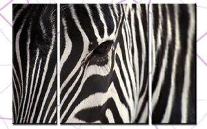 ZEBRA HEAD 3 BILDER LEINWAND 120x80 TIER AFRIKA