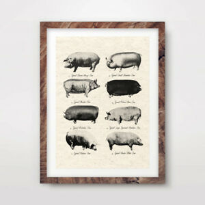 PIG BREEDS ANTIQUE FARMING ART PRINT Agricultural Poster Wall Picture Kitchen