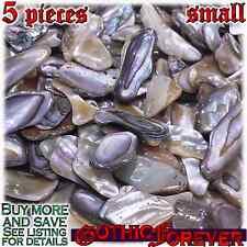 5 Small 10mm Combo Ship Tumbled Gem Stone Crystal Natural - Abalone Shell