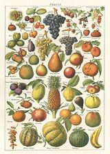 Fruits - Fruit  Poster Cavallini & Co 20 x 28 Wrap