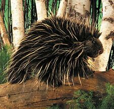"Porcupine Hand Puppet by Folkmanis - 13"" Long, 5 "" Wide, 7"" Tall - 2876 (New)"