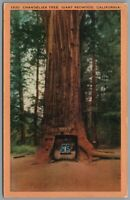 Postcard Chandelier Tree Giant Redwood CA drive through with car California
