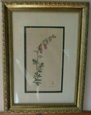 GORGEOUS FRAMED ANTIQUE BOTANICAL PRINT F. SOWERBY CIRCA 1794