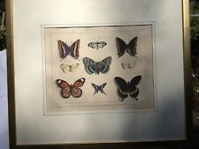 Antique 18th century Print of Butterflies Hand Colored Engraving