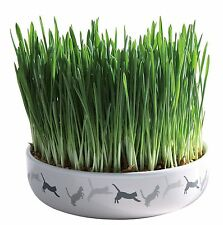 "Ceramic Bowl with Grow your Own Cat Grass 50g Seed 15cm (6"") Bowl"