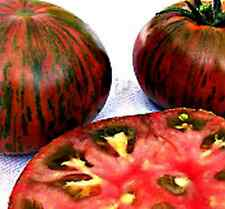 35 Seeds - Tomato Heirloom - CHOCOLATE STRIPES - TRULY BEAUTIFUL & TASTY