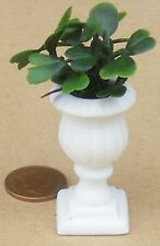 1:12 Scale Ceramic Pedestal With An Evergreen Plant Tumdee Dolls House Garden