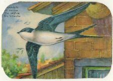 Hirondelle de fenêtre-delichon urbica-Chromo gaufré Verni-Oiseau-Bird-Réf.180