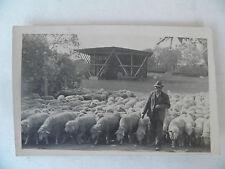 Foto AK 1943 Schäfer Stempel Neuburg a. d, Donau Feldpost