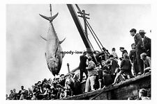 pt3623 - Landing Tunny Fish at Scarborough , Yorkshire - photo 6x4