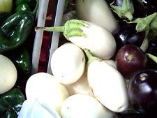 eggplant, WHITE CASPER, RARE HEIRLOOM, 10 SEEDS! GroCo
