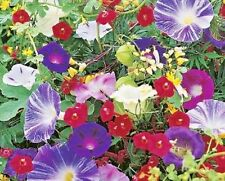 SPECIAL MIX OF ANNUAL CLIMBING PLANTS - APPROX  2g - HIGH QUALITY FLOWER SEEDS