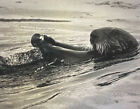 Tom Weber's Cannery Row Sea Otter Photography.