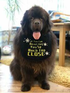 BIG DOG DROOL/SLOBBER BIB  NEWFOUNDLAND,ST BERNARD, ALL SLOBBERY BREEDS