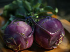 A 1g (approx.270) deep purple kohlrabi seeds BLANKYT sweet flavor, crunchy flesh