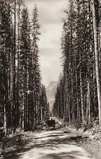 1925 Vintage CANADA Horse & Buggy Carriage Banff Alberta Mountain Road Landscape