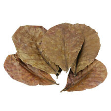 50 g Indian Almond Leaves Leaf Shrimp Fish Aquarium Waters Creative Supply LACX