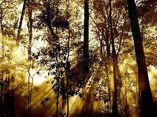 NATURA PAESAGGIO FOTO Sun Beam ALBERO FORESTA COOL poster art print bb1471a