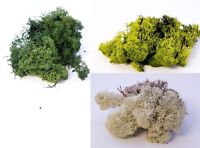 Treated Real Reindeer Moss Lining Craft Flower Hanging Baskets Plant New