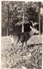 RPPC Deer in PA Grand Canyon Caulkins 1946