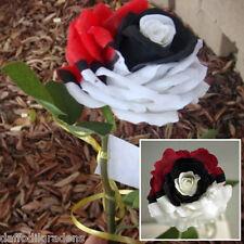 New 12Pcs Splendid Rare Red White Black Rose Flower Seeds Beautiful Plant Garden