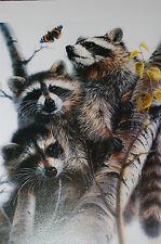 Vivi Crandall WASH BEARS Fine Art Wildlife Print Signed Only Edition RACCOONS