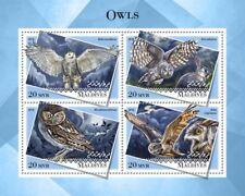 Maldives 2018 Owls S201808