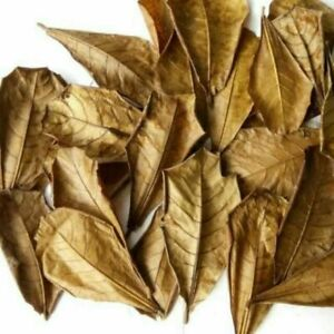 20 Pcs Catappa Indian Almond Leaves (Daun Ketapang) Fish Aquarium Care