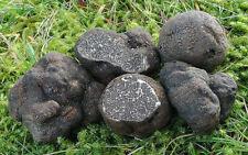 10 g Fresh BLACK OREGON TRUFFLE Tuber Mycelium Mushroom Spawn Spores Seeds