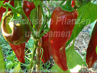 🔥 🌶️ Numex Big Jim Pepper Chili Paprika mittelscharf 10 Samen Balkon Kübel