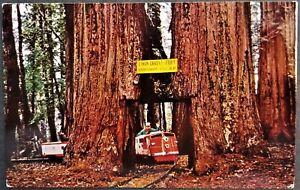 Roadside Attraction: Miniature Railroad at Twin Drive-Thru Redwood Tree, CA.