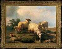 "Old Master-Art Antique Oil Painting animal Portrait sheep on canvas 30""x40"""