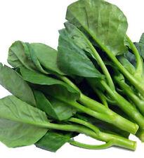 100+ Seeds Chinese Kale Kailaan Chinese Broccoli Gai Lan Choi vegetable USA