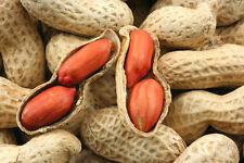 Spanish Peanuts Ukraine heirloom Vegetable seeds