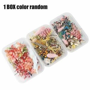 1Box Real Pressed Dried Flowers For Art Craft Resin Pendant Jewellery Making A+