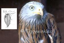 CHARITY VIRTUAL GIFT - RED KITE - TRICHOMONIASIS TREATMENT - Tiggywinkles