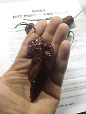 Chocolate Bhutlah combo fresh seeds and powder from 2016 season air dried