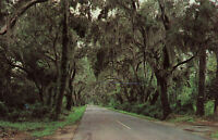 Postcard The Road To Summerville South Carolina