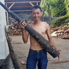 3.4 Kg Black Tongkat Ali Wild Harvest Pasak Bumi Borneo Polyalthia Bullata Rare
