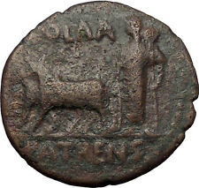 Divus AUGUSTUS Tiberius Time PATRAEA Ox Founding Peloponnesos Roman Coin i57640