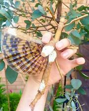 Giant Stick Insect • (Phasma gigas), 10 EGGS - feeder food