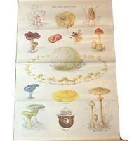 Vintage 1988 Smokey Bear fungus plant poster educational  20 x 30 Have fungi.